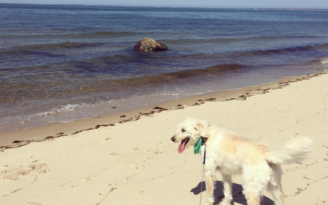 5 Best Places Near Brewster by the Sea to Enjoy Nature!