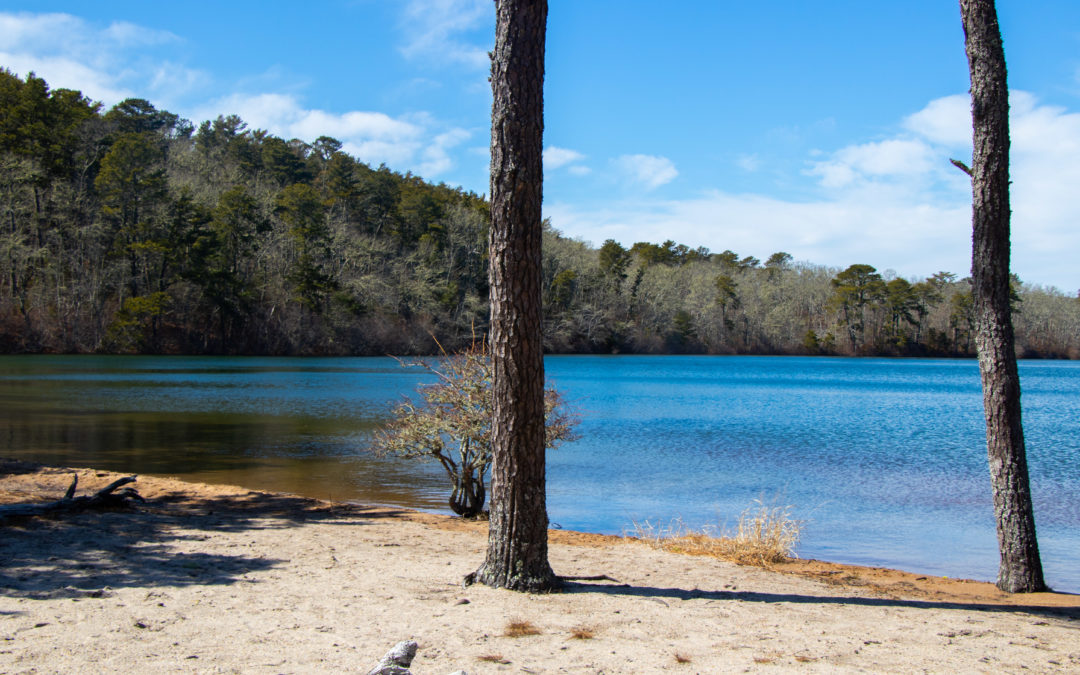 4 Cape Cod Ponds to Visit this Summer