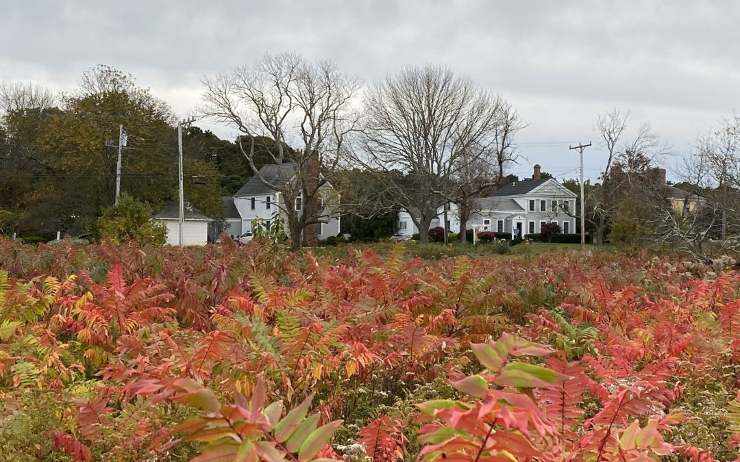 Things to Do on Cape Cod in November