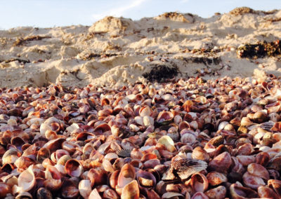Shells on a beach | Brewster By the Sea Bed and breakfast | Cape Cod, Brewster, MA