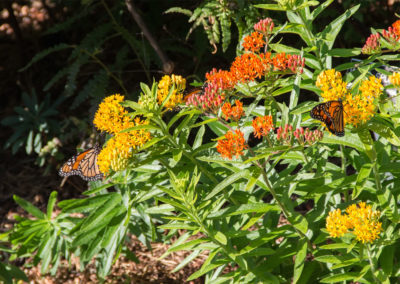 Flowers with butterflies | Brewster By the Sea Bed and breakfast | Cape Cod, Brewster, MA