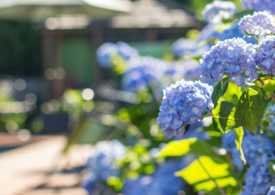 Blue flowers | Brewster By the Sea Bed and breakfast | Cape Cod, Brewster, MA
