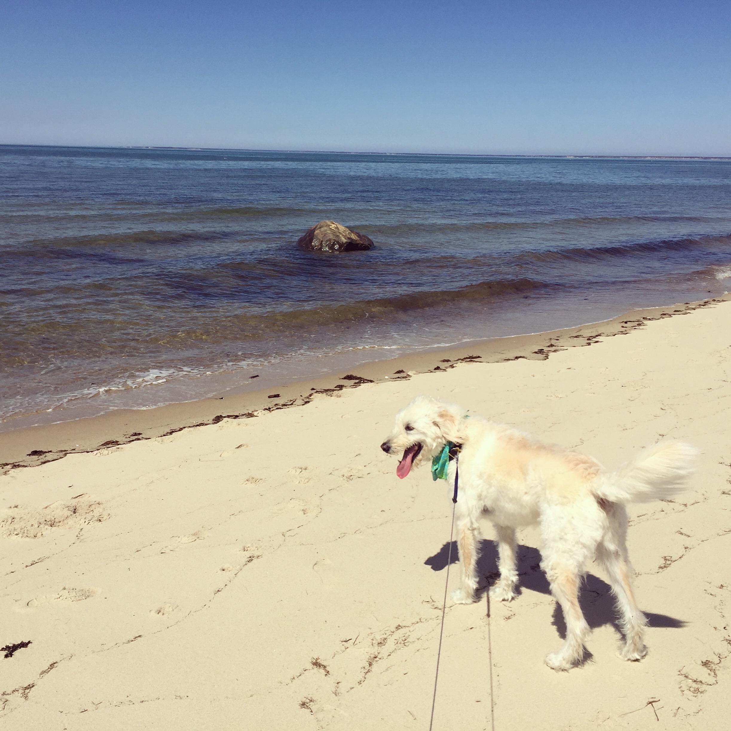 Breakwater Beach, Brewster MA  | Brewster By the Sea Cape Cod Inn | Brewster, MA