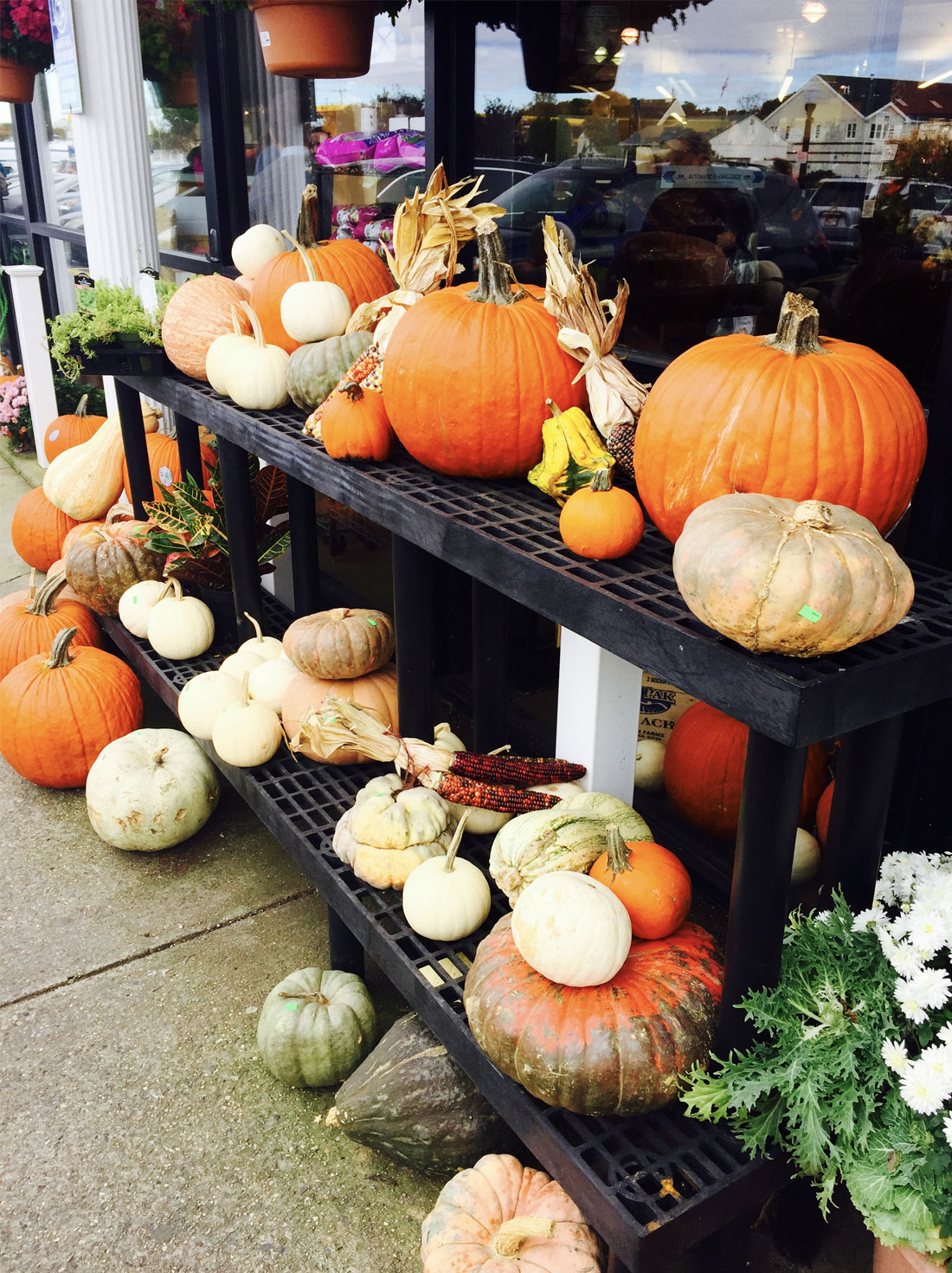 Pumpkins & Gourds at Ring Bros. | Brewster By the Sea Cape Cod Inn | Brewster, MA
