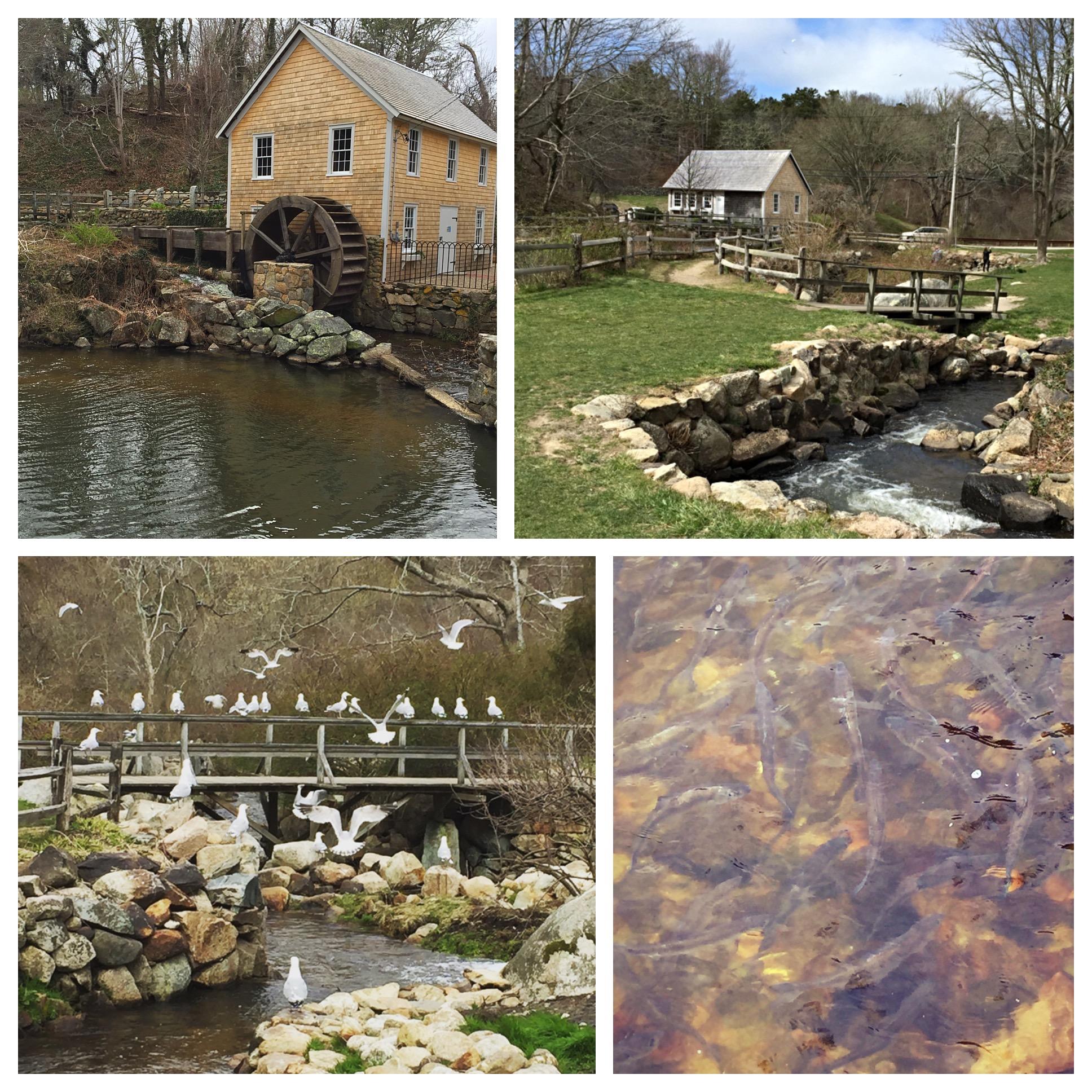 Stony Brook Grist Mill  | Brewster By the Sea Cape Cod Inn | Brewster, MA